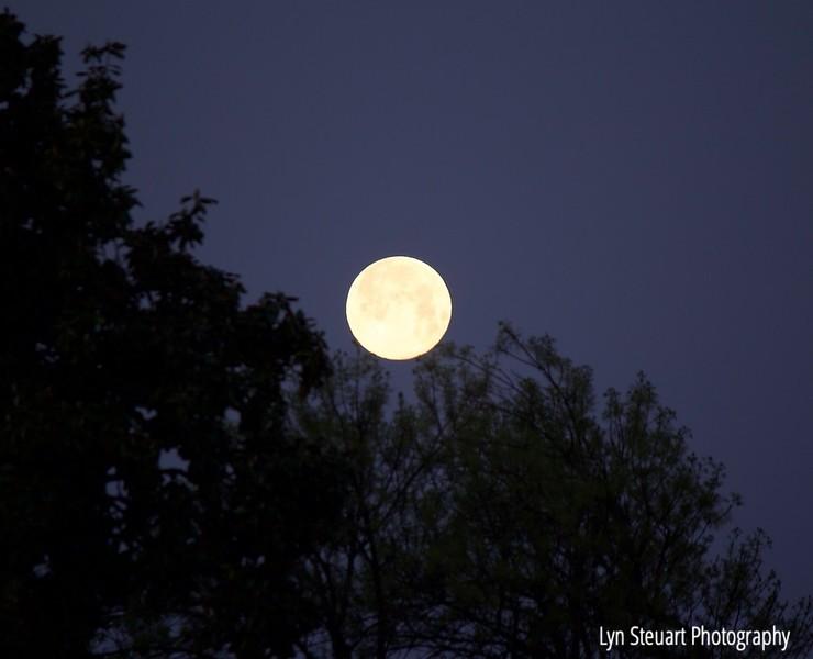 Full Moon in May 2020