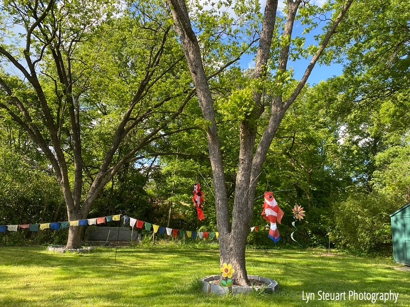 Have always enjoyed the wind!  Tibetan prayer flags and wind spinners!