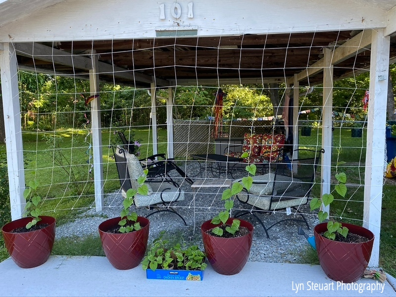 Outdoor room made under the carport for summer with moon flower plants climbing