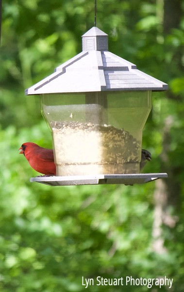 One of many bird feeders in the yard