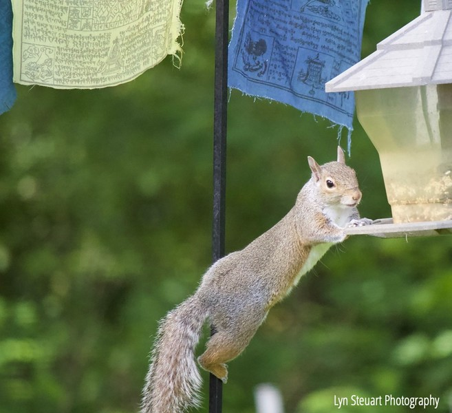 Sharing the bird feed with the squirrels