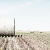 Rolled Bales of Hay in Rural America (High Key)