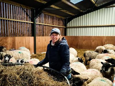 Farm views 2020