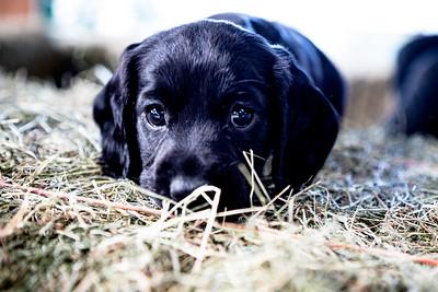 Meet the Pups!