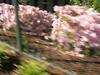 04/28/2010-15 - Biking the Greeneway