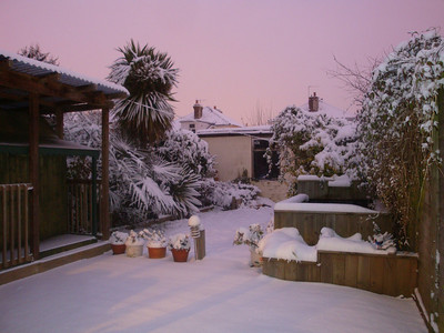 Our garden 2nd Dec 2010, early