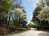 Flowering trees, 04/06/2011