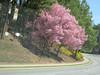 Flowering trees, 03/03/2011