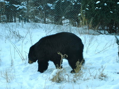 Bear, bear