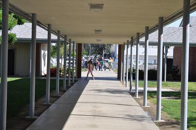 Goshen School Garden - Robin 2052