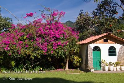 Guatemala Mission Trip - Day 3 -  Sunday, November 11, 2007  Bouganvilla inside our compound at Buenas-Nuevas.
