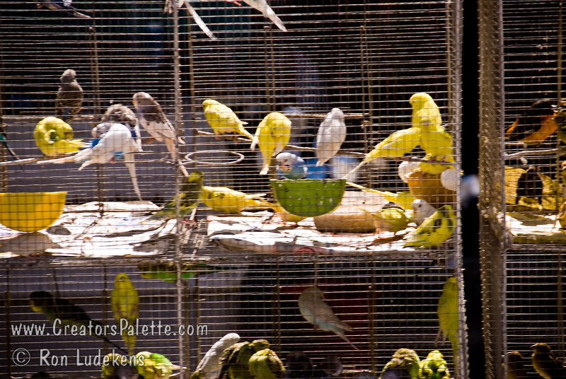 Guatemala Mission Trip - Day 8 - Friday, November 16, 2007   <br /> Along the road in Chimaltenango we saw these birds for sale.