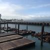 4-6-13: A Day in SF... Pier 39