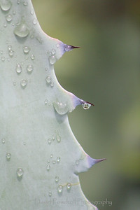 Cactus after the rains