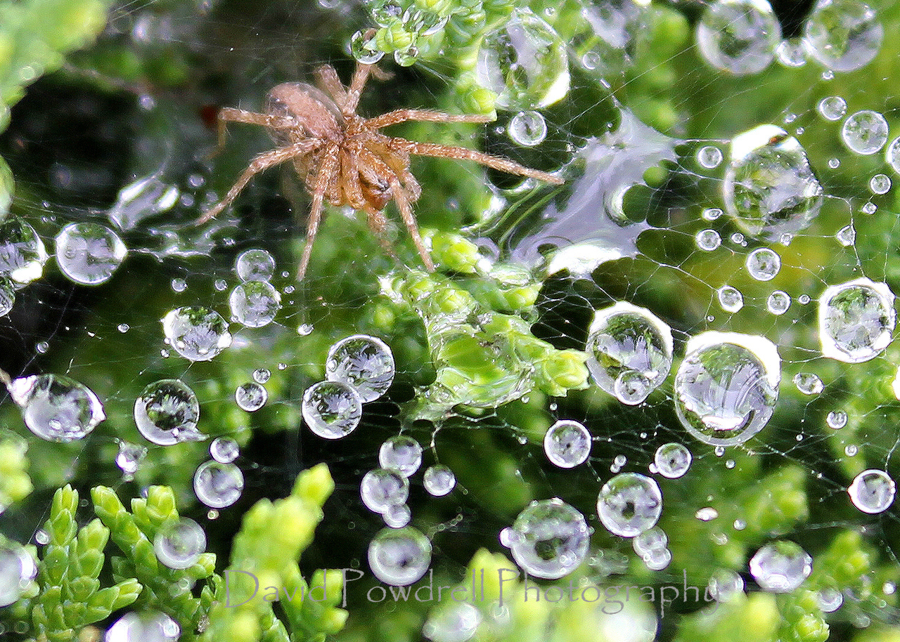 Spider after a morning rain