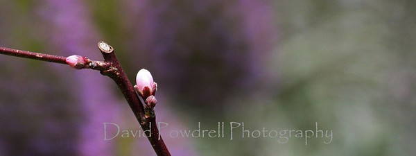 First buds in spring