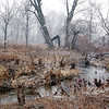 Snowing in Coffee Creek, Chesterton, Indiana<br /> February, 2009