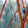 Taltree Arboretum, Valparaiso, Indiana<br /> January, 2009