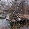 Snow in Coffee Creek, Chesterton, Indiana<br /> February 2009