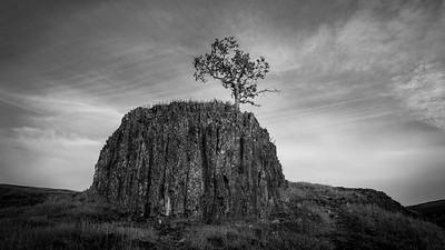 TLT - Tough Little Tree