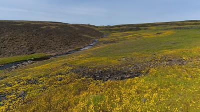 Ephemeral Creek