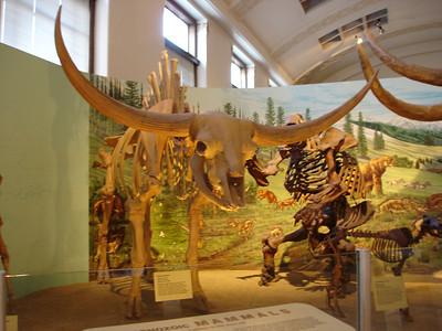 Utah Museum of Natural History, Salt Lake City