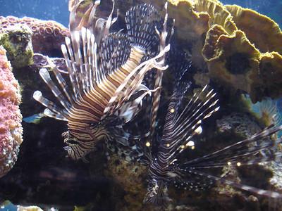 Living Planet Aquarium, Sandy, UT