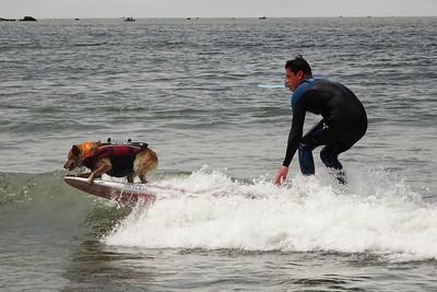 Dog Surf Championship