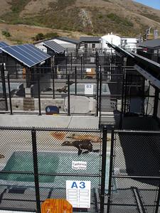 (Marin) Marine Mammal Center