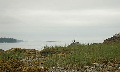 Cormorants having a huddle....