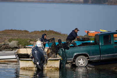 Fisherman arrive with the morning's haul of oysters.