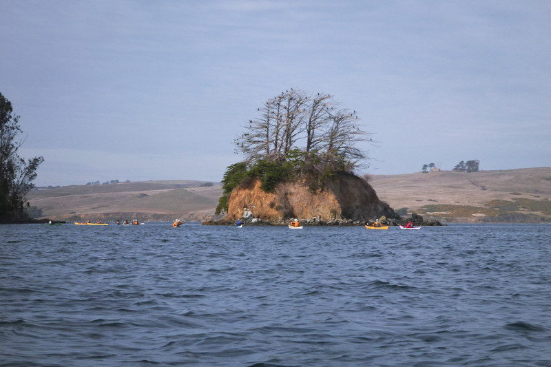 Piglet island, with cormorants decorating a tree, christmas-style.