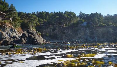 Forging our way through kelp was like paddling on carpet.