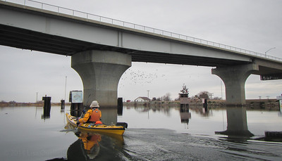 "Mud swallows emerge from under the Little Potato Slough (Hwy 12) bridge.  This bridge, built in 1991, replaced the original bridge built in 1936 and was much lower to the water.  In 1995, this bridge ceased routine scheduled summer operation and became an ""on demand"" only bridge, requiring 4 hours notice to the Coast Guard to get it to swing open."