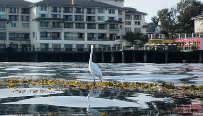 I stayed over to Tuesday morning for a tour of Monterey Bay.