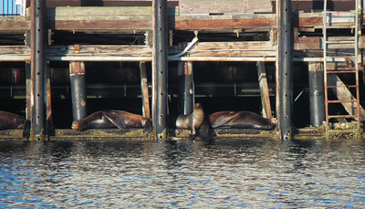 Ah, the life of the sea lion.
