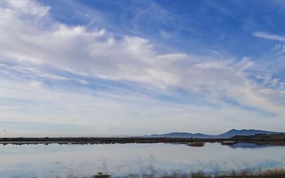 The wetlands of Petaluma Point.