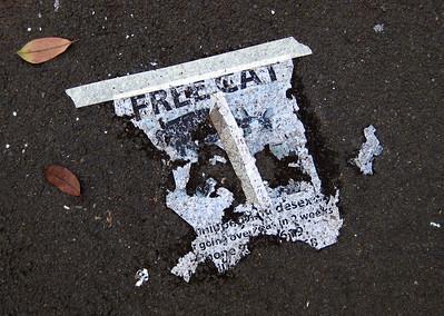 Free cat, Mullens Street, Balmain 2010