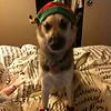 Zoe the elf