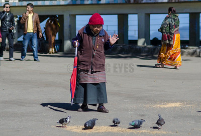 """C8:""""Be well"""" ,the old lady seem to be saying to the pigeons after feeding them grains on Mall Road in Darjeeling ,West Bengal"""