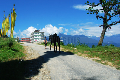 C1:A boy and his horse walk up the path towards upper Pelling in West Sikkim