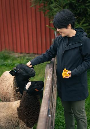 Sheep and Shrooms