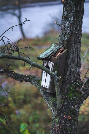 A Birdhouse Where Birdhouses Are Not Expected