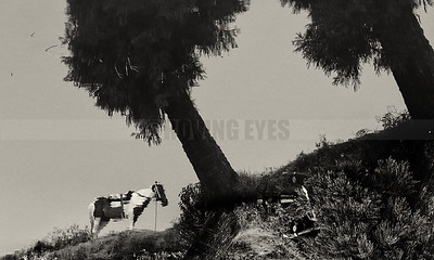 C3:Reflection of a horse patiently waiting for tourists beside  Sumendu Lake in Mirik,West Bengal