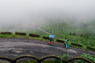 C2:Dense mist limits visibility and almost completely hides the green in Saureni Tea Estate,Mirik,West Bengal.