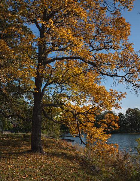 Mandatory Fall Colors