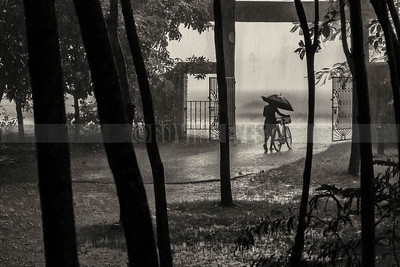 C25:Monsoon comes to Chilapata,in Dooars,West Bengal