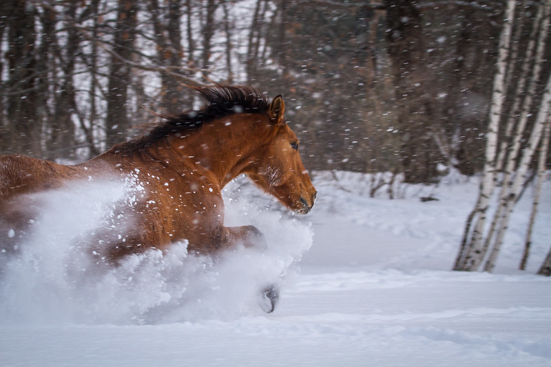 Winter Romp