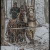 Gathering Firewood