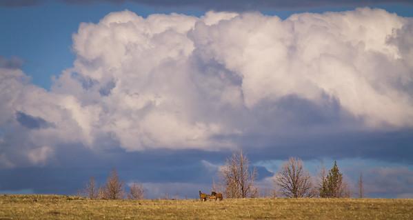 Keiger Mustangs